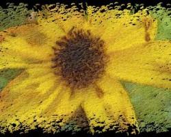 wpid-superphoto_30.jpg